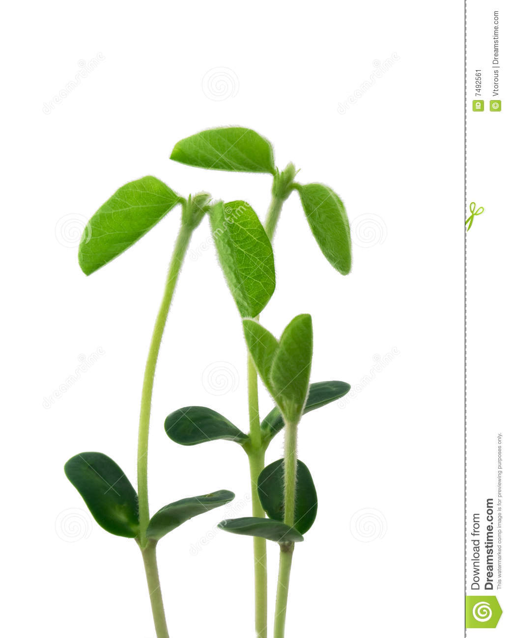 Young plants like a familiy