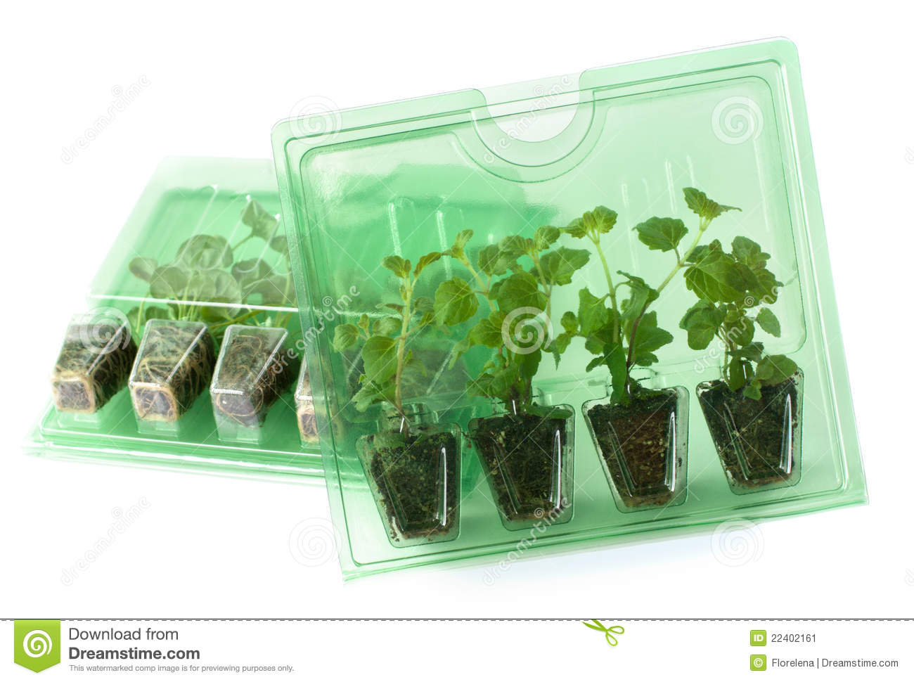 Young Plants In Packs For Mail Order Stock Image Image Of Order