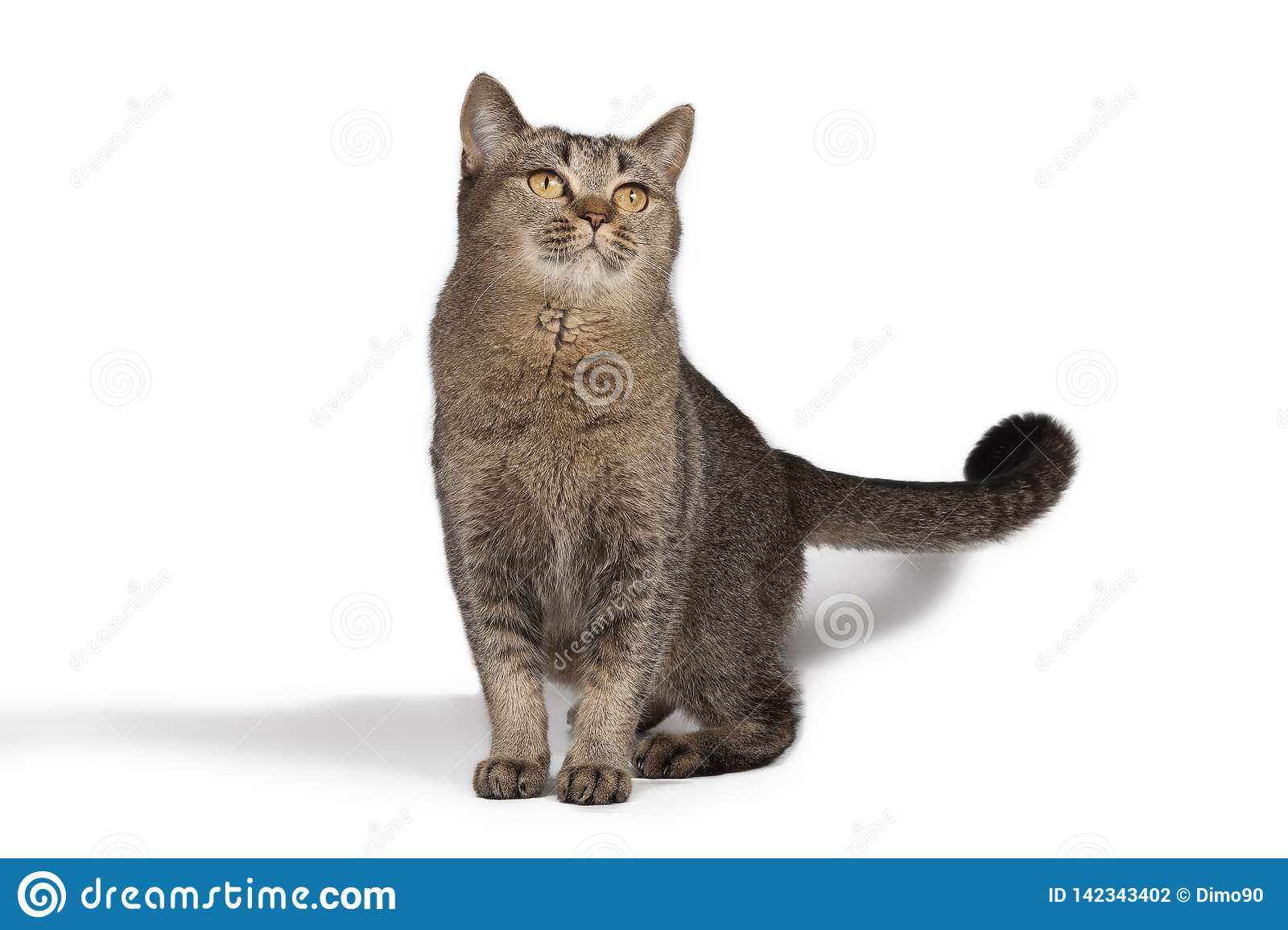 Funny Cute Cat Posing On White Background Stock Photo