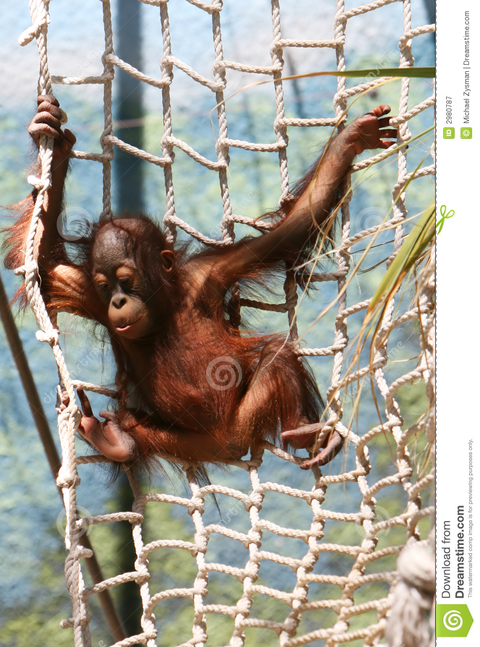 Young Primate