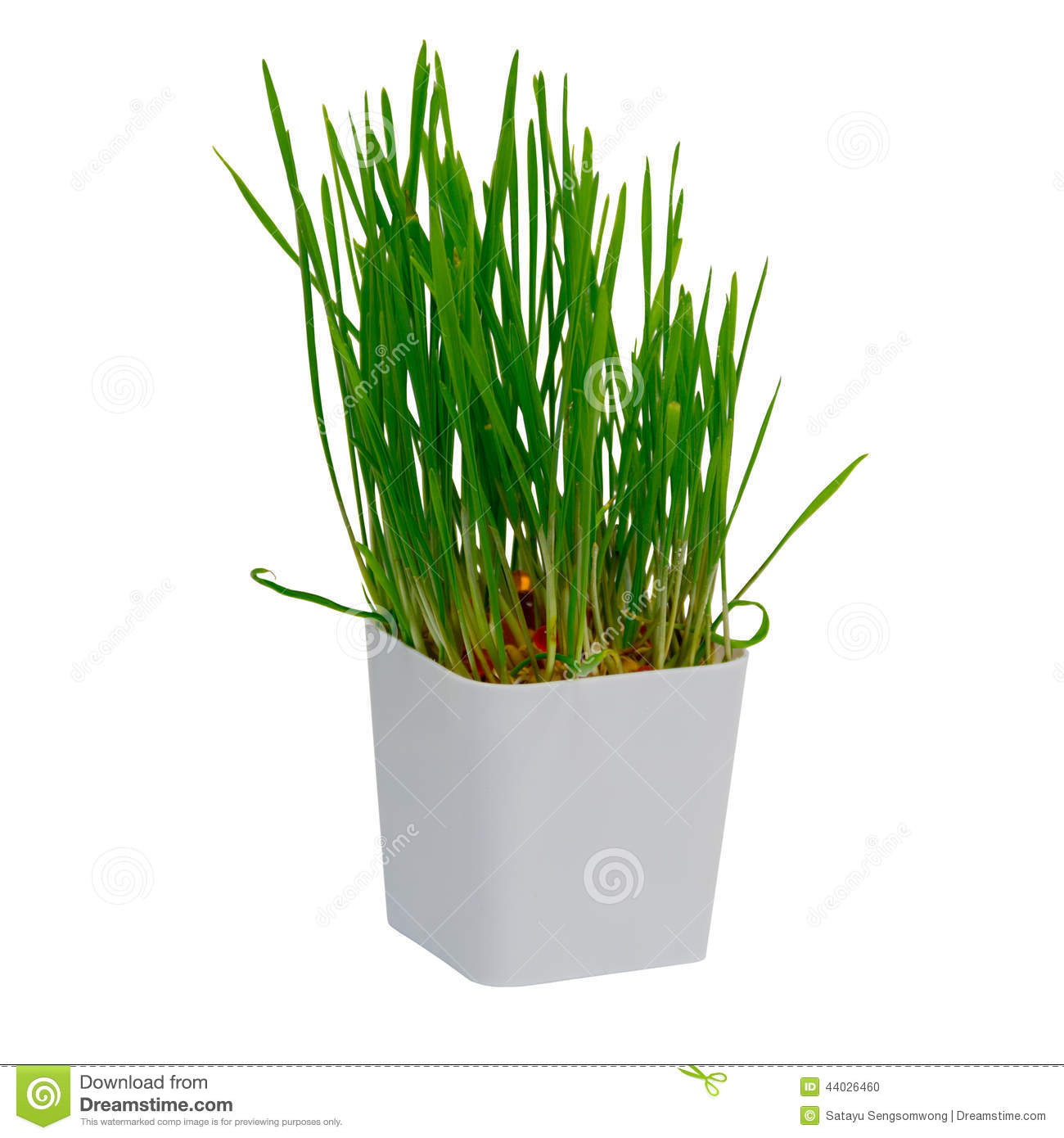 Rice field with small house and tree stock photo What are miniature plants grown in pots called