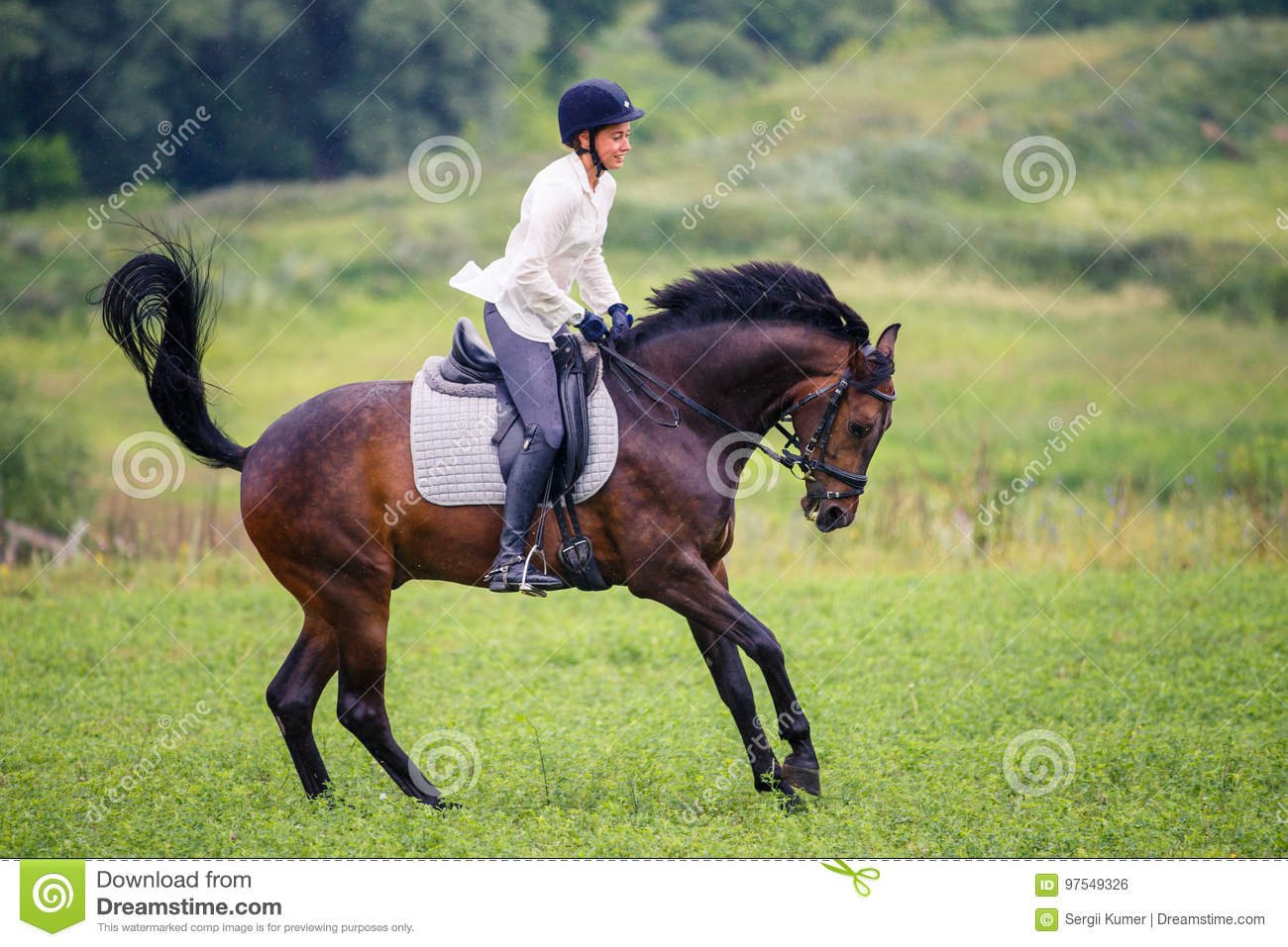 Young Rider Woman Galloping On Bay Horse On Meadow Stock Photo Image Of Animal Graceful 97549326
