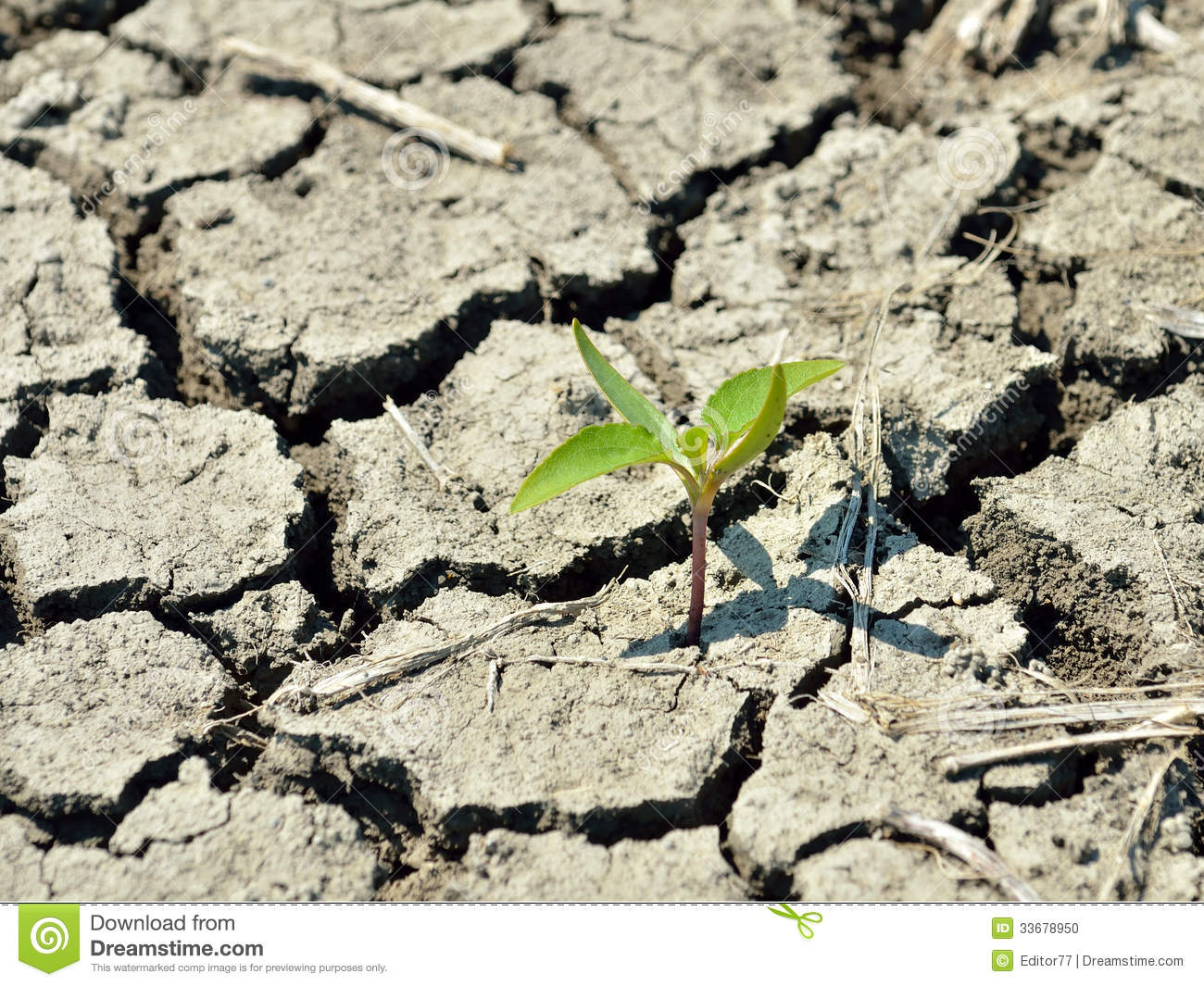 Young seedling stock photo image 33678950 for Soil young s modulus