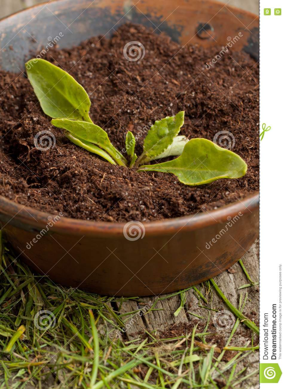 Young seedling growing in a soil stock images image for Soil young s modulus
