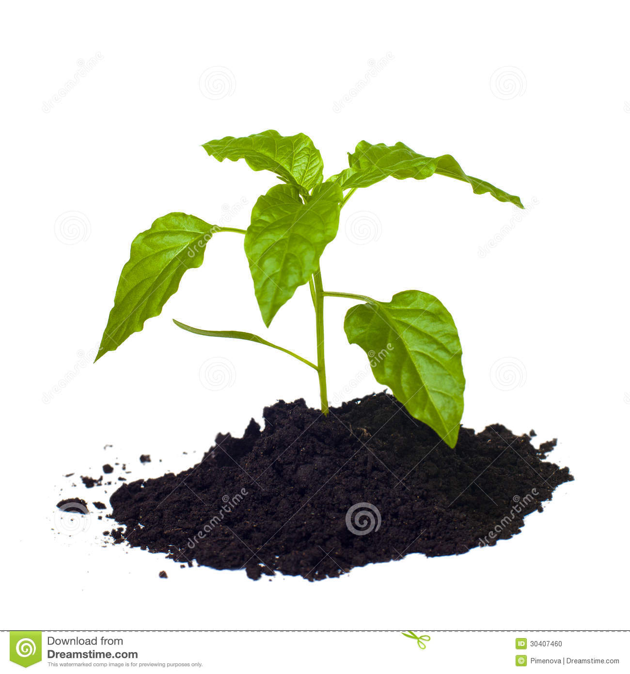 Young seedling growing in a soil stock photo image for Soil young s modulus