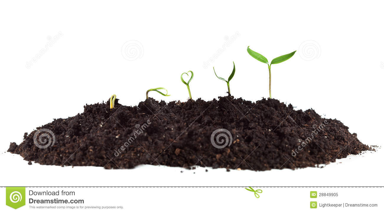 Young seedlings growing in soil heap royalty free stock for Soil young s modulus