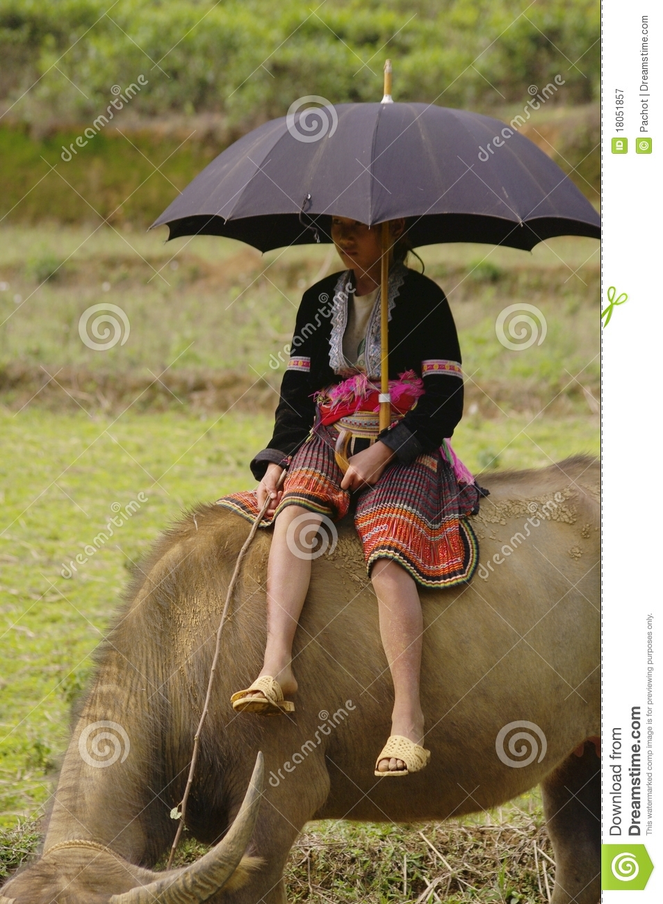 Young Shepherdess Hmong flower sitting on his buff