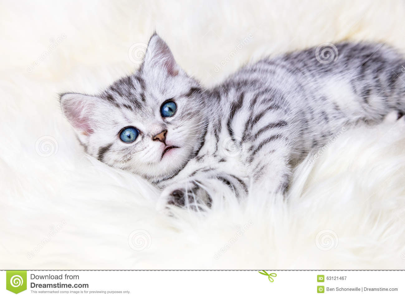 Young Silver Tabby Spotted Cat Lying On Sheep Skin Stock Image
