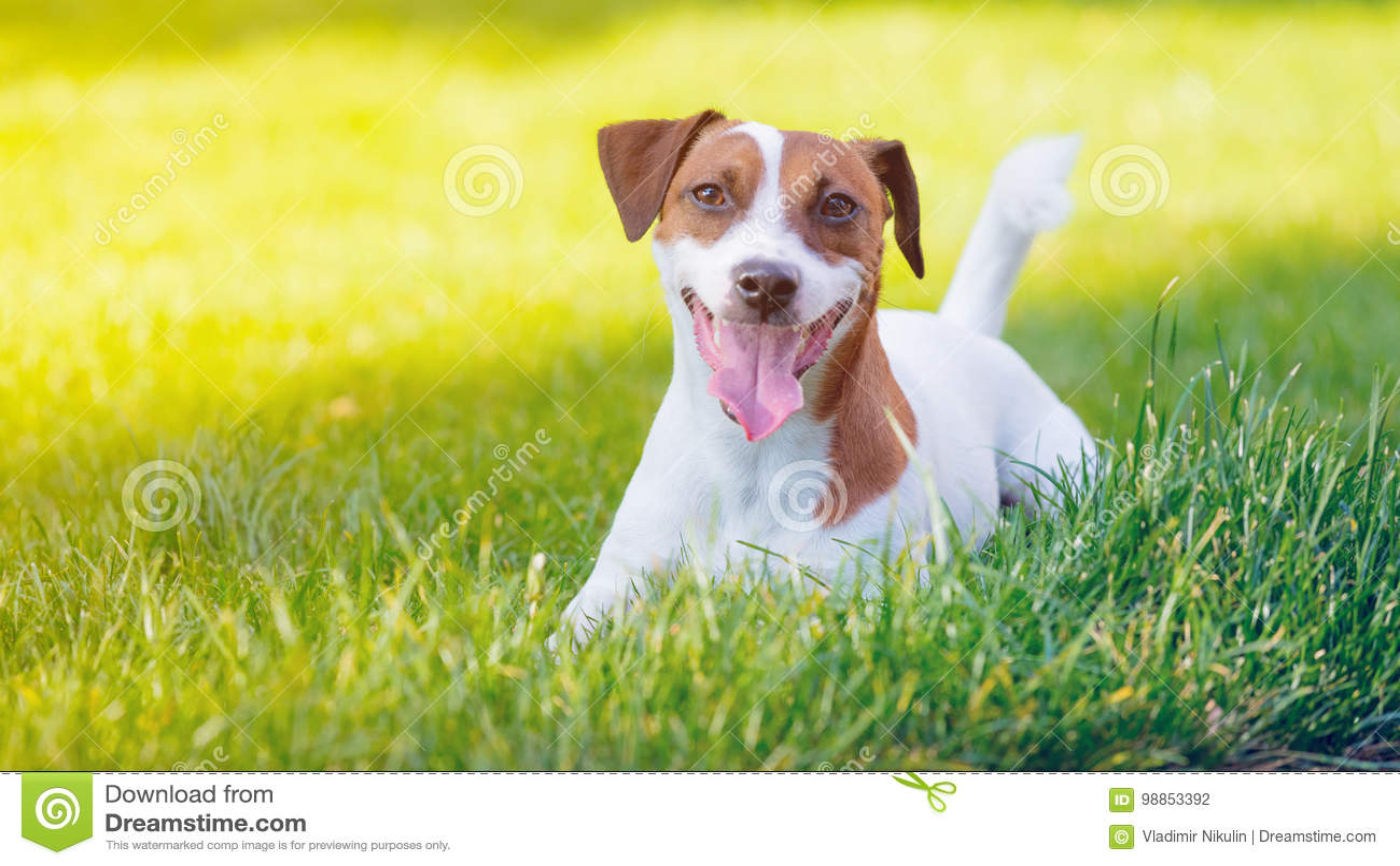 Walking Dog Clean Up Diarrhea