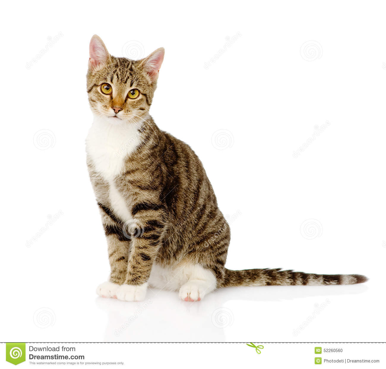 Young Tabby Cat. On White Background Stock Photo - Image: 52260560