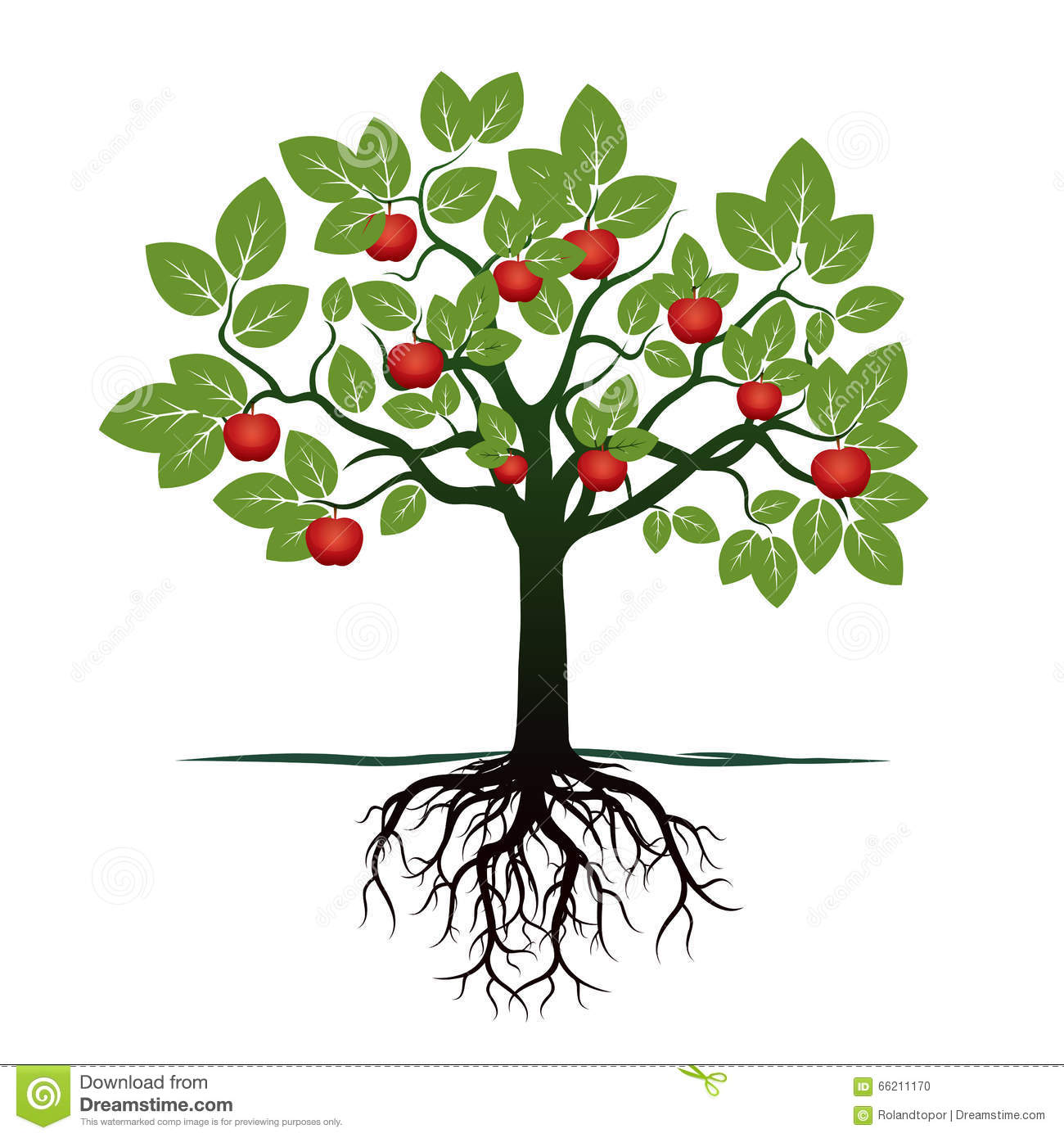 Young Tree with Green Leafs, Roots and Red Apples. Vector Illustration ...