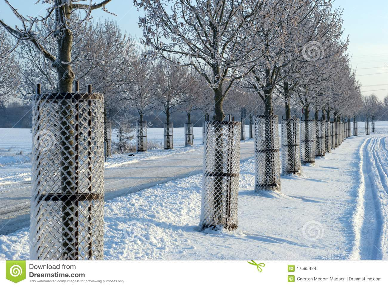 Young Trees In Protection Stock Photo Image Of White
