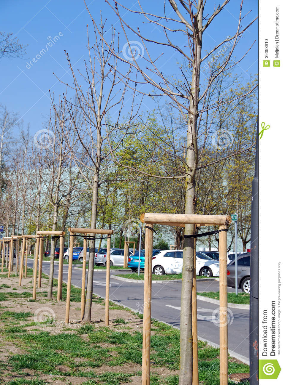 young trees support stock photo image of parking trees 39398610
