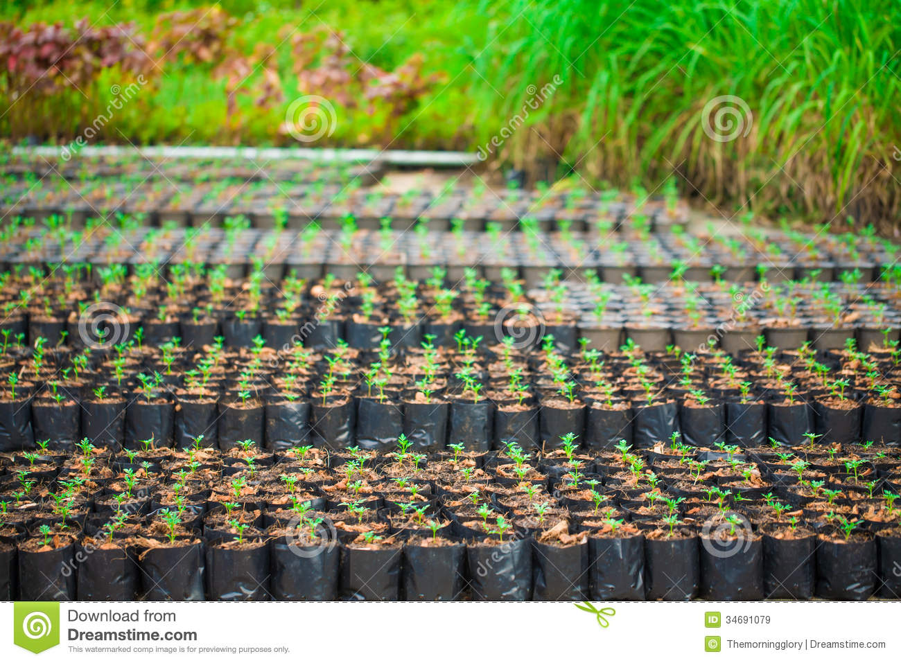 Young Vegetable Garden Fields Stock Image Image 34691079