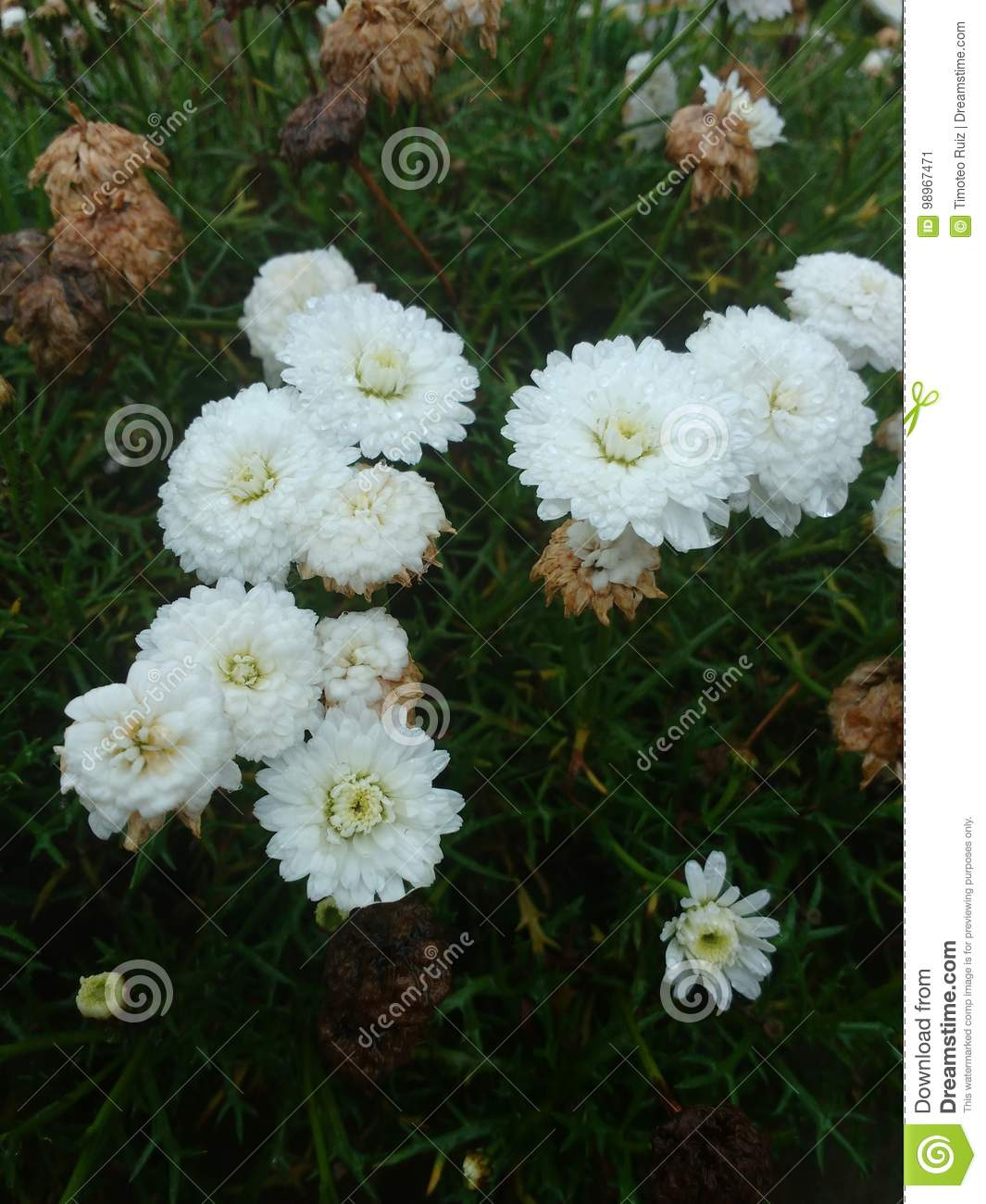 Young White Flower Surrounded By Death Stock Image Image Of Water