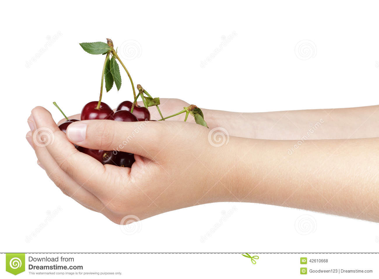 Young woman hands full of cherry berries