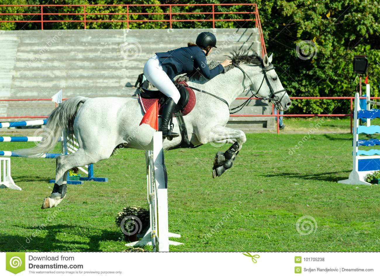 Young Woman Jockey Ride Beautiful White Horse And Jump Over The Crotch In Equestrian Sport Stock Photo Image Of Lifestyle Competition 101705238