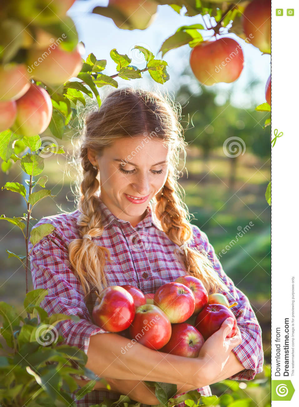 young woman picking apples from apple tree on a lovely