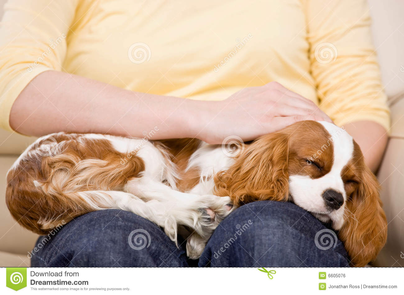 young woman with puppy sleeping on lap royalty free stock