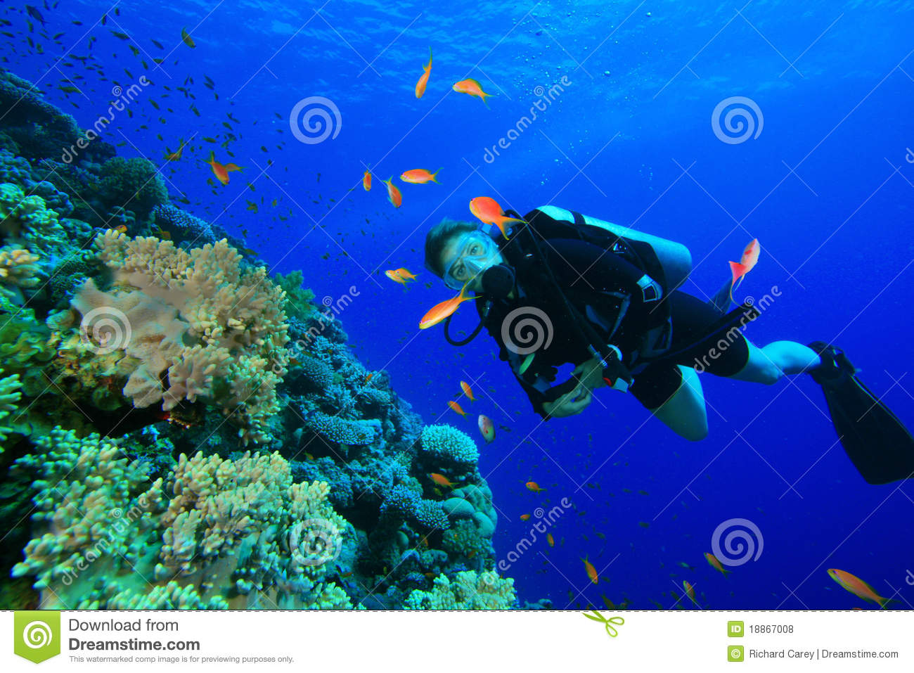 Young Woman Scuba Diver Royalty Free Stock Photos - Image: 18867008