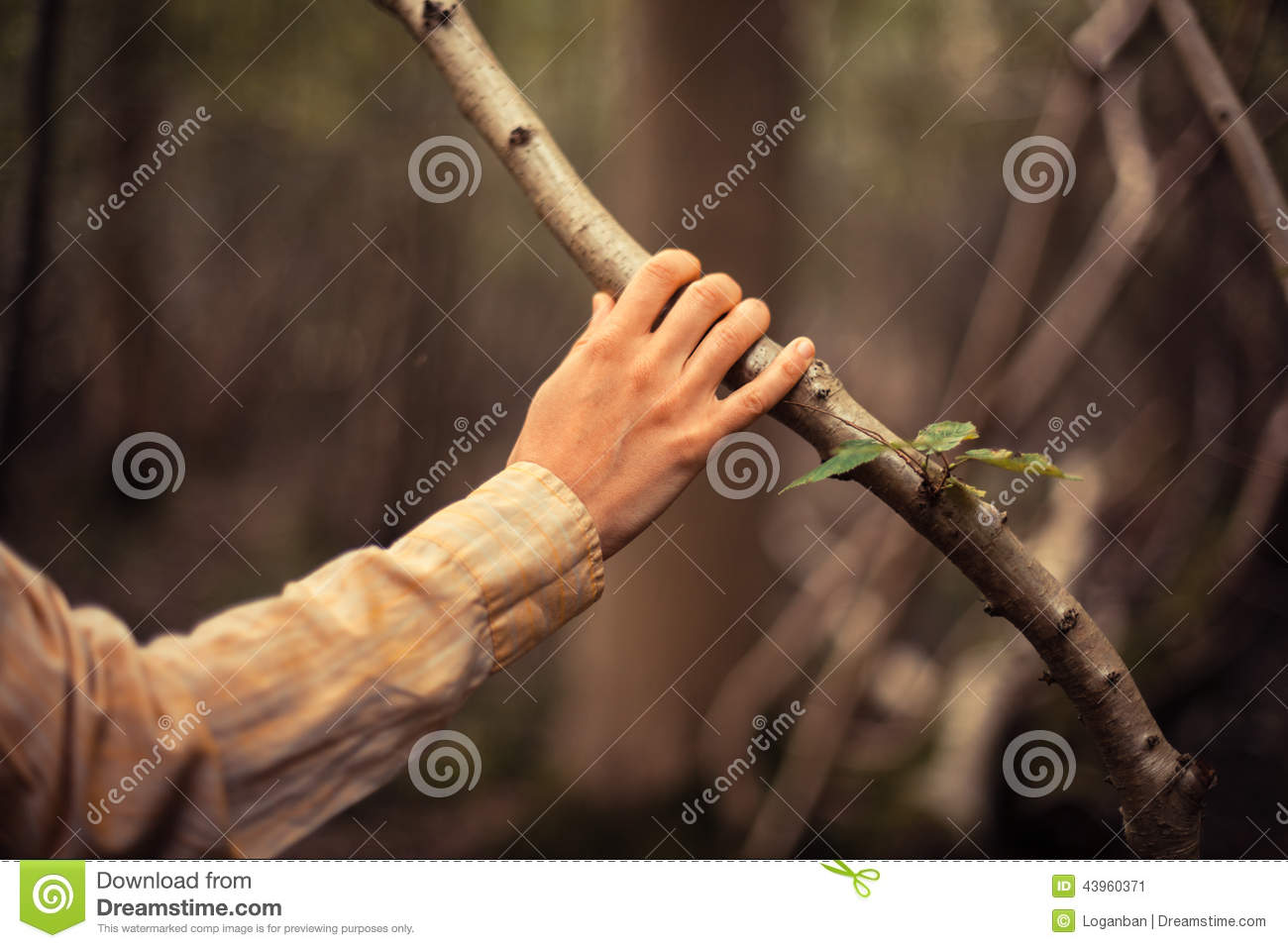 Download Young Woman Is Touching A Tree Branch Stock Image - Image of tree, plant: 43960371