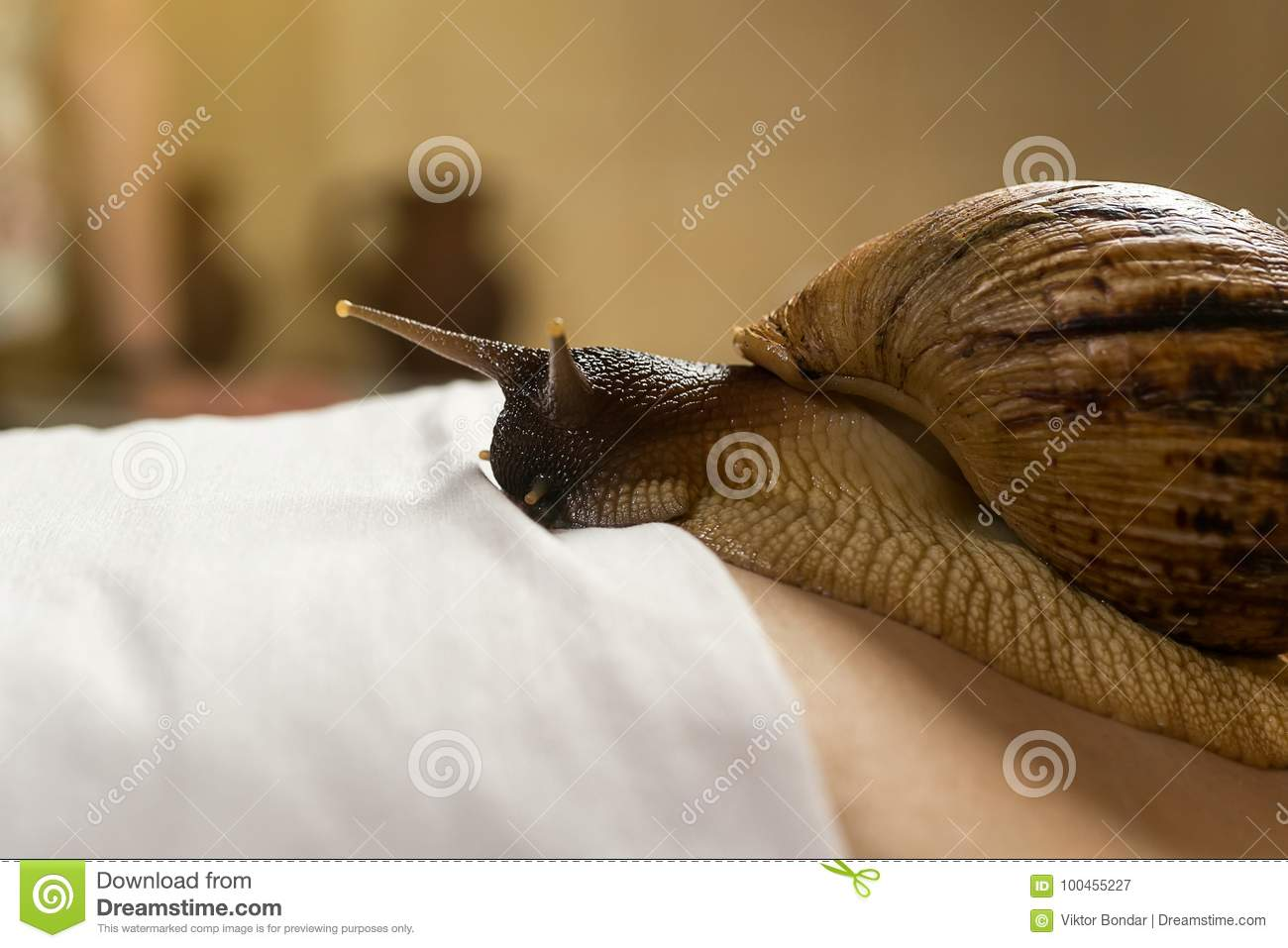 Achatina snails in cosmetology: how to use 10