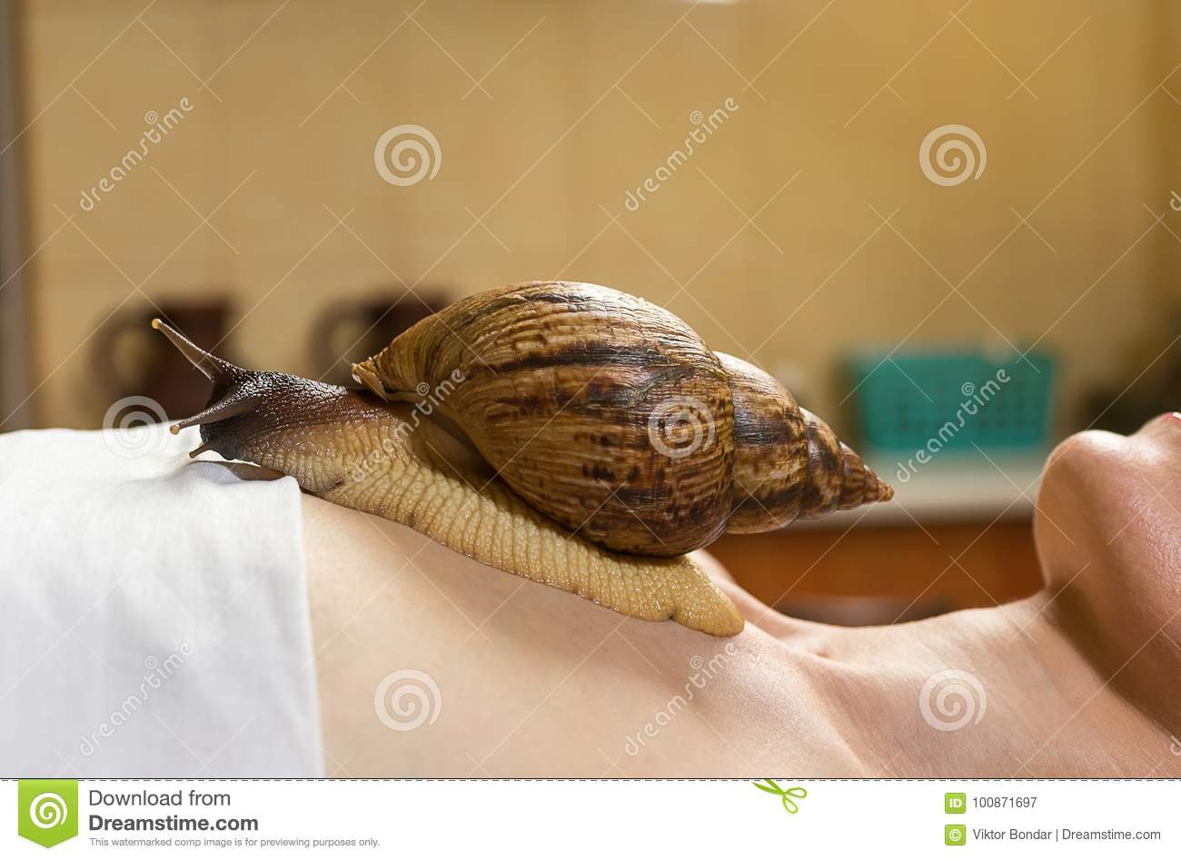 Achatina snails in cosmetology: how to use 37