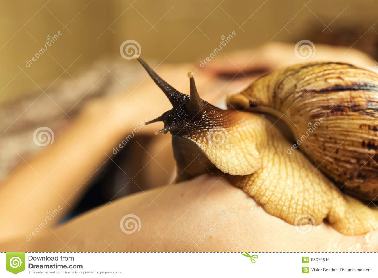 Achatina snails in cosmetology: how to use 93