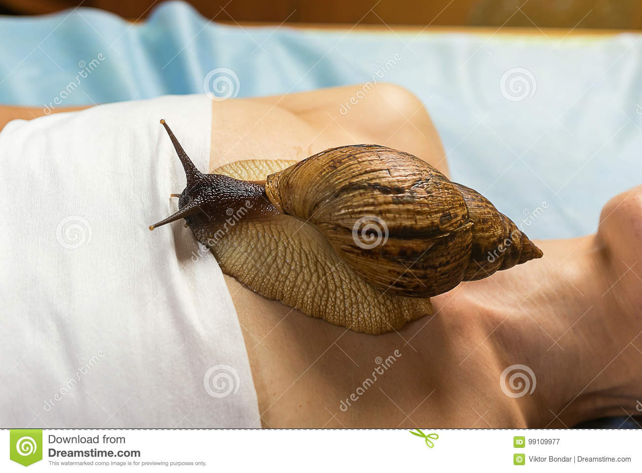 Achatina snails in cosmetology: how to use 26