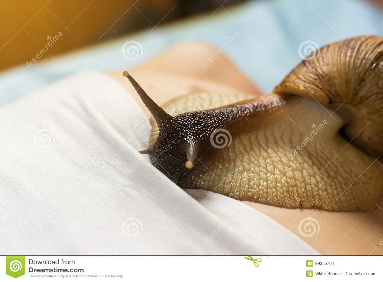 Achatina snails in cosmetology: how to use 67