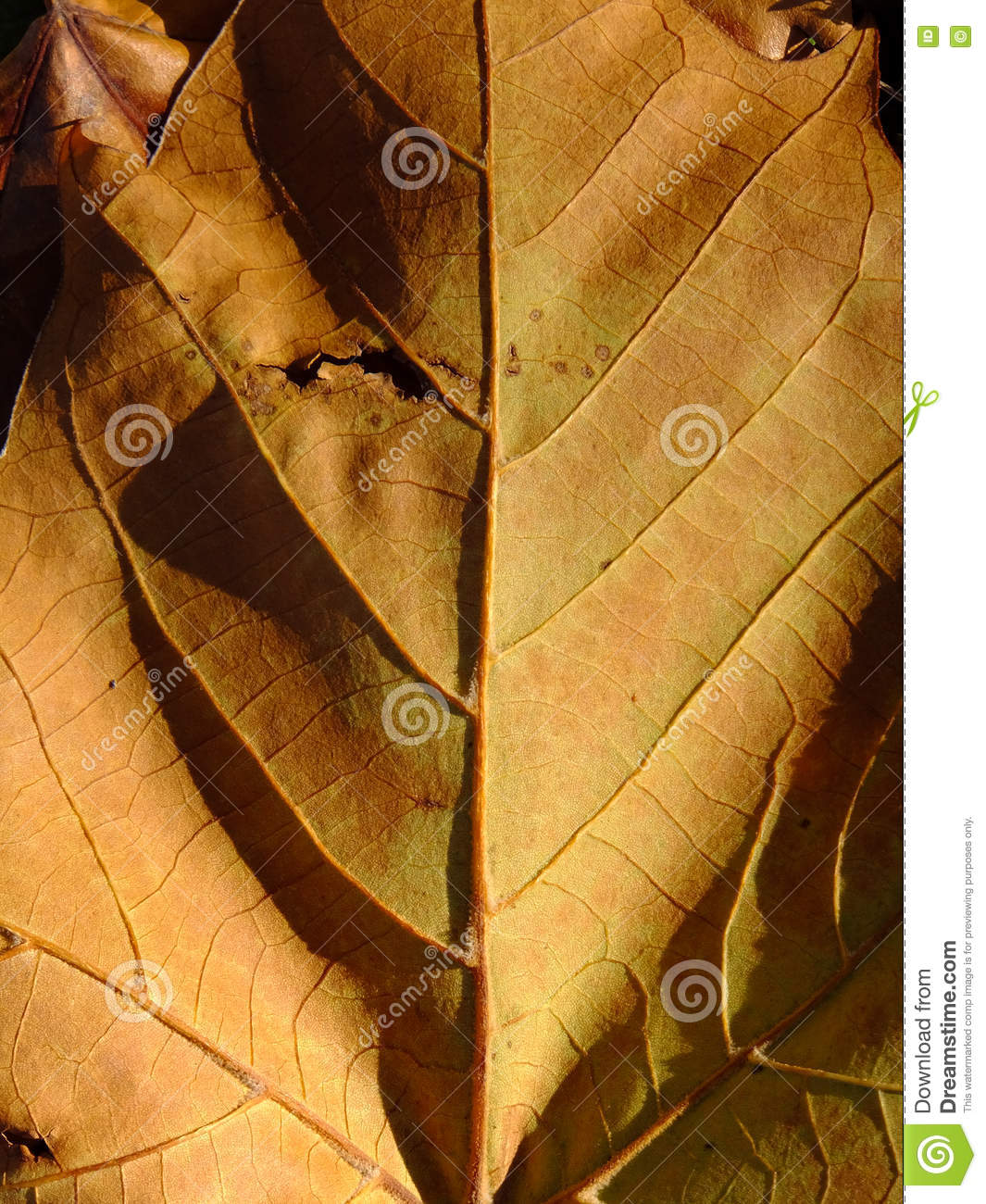 Your Inner Leaf