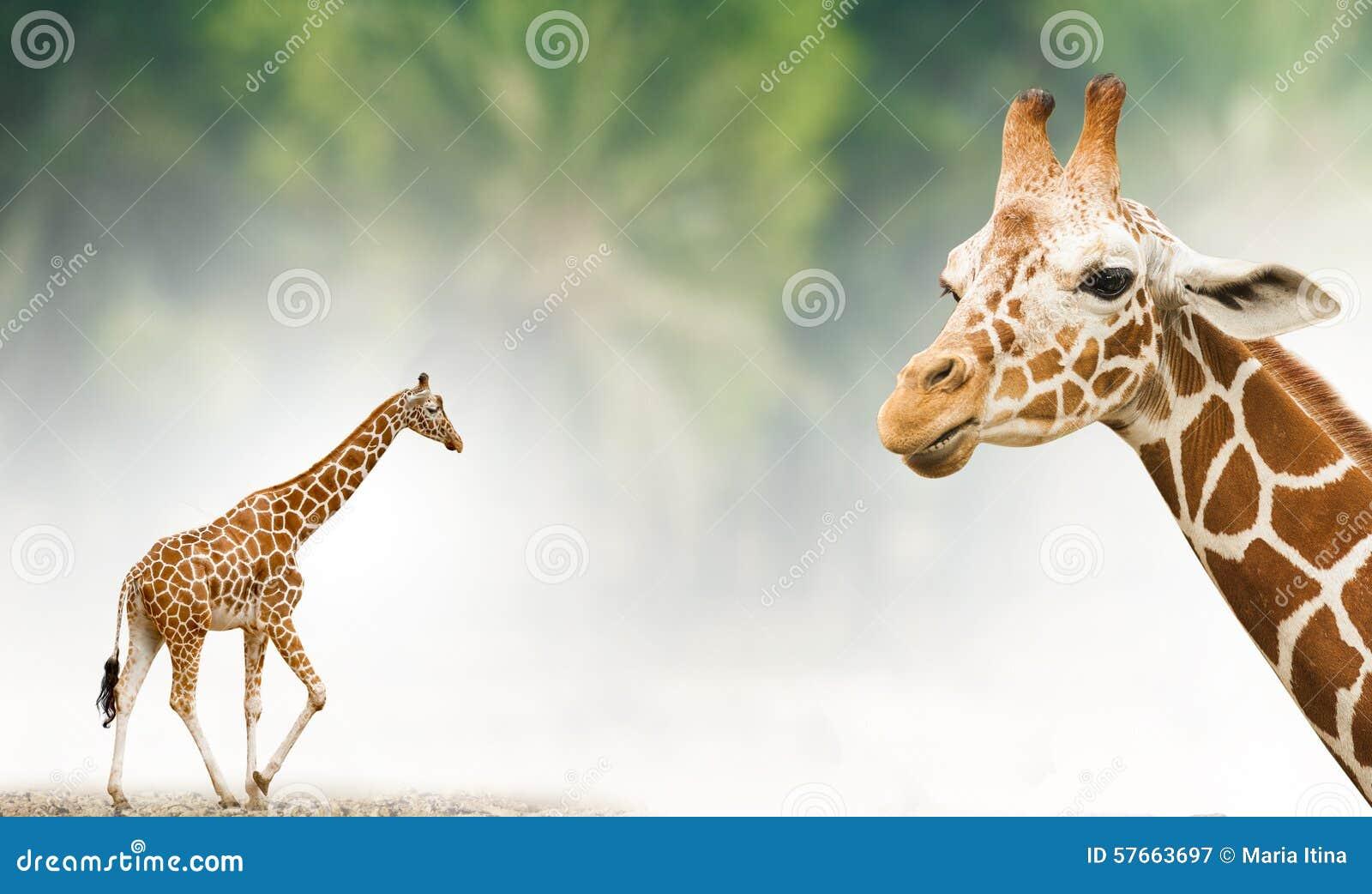 Żyrafa tematu tło