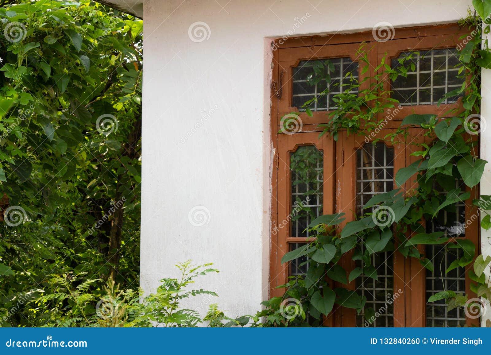 Yttre husfönster som täckas med bladvinrankan