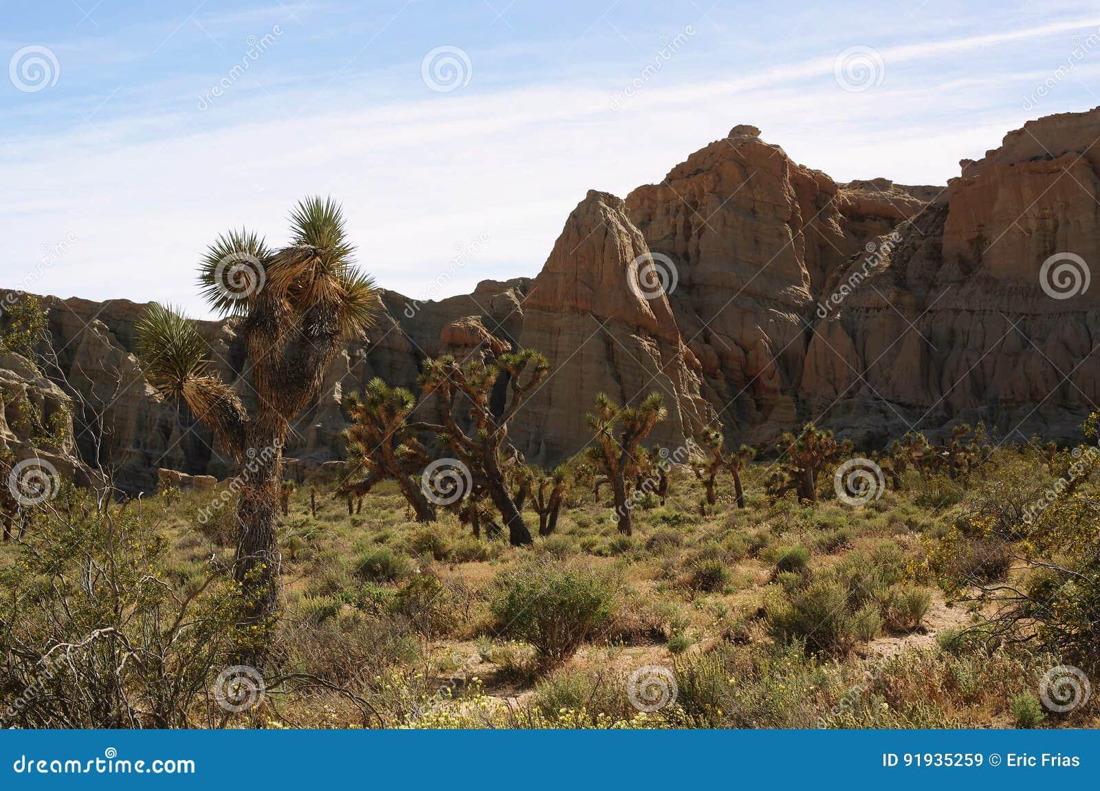Yucas en barranco rojo de la roca