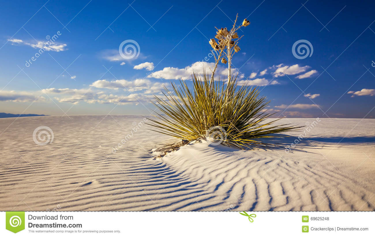 Yucca Plant on Sand Dune at White Sands National Monument - Time