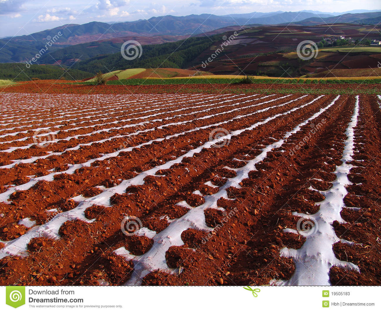 write about red soil yunnan