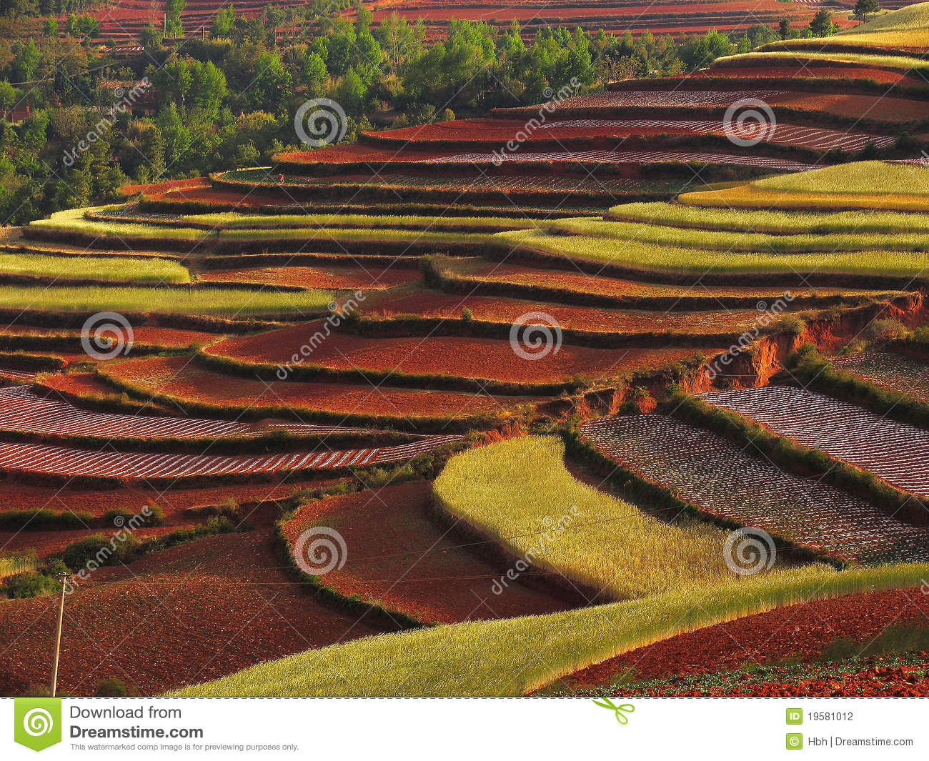 Yunnan red soil dry stock photography image 19581012 for What soil contains