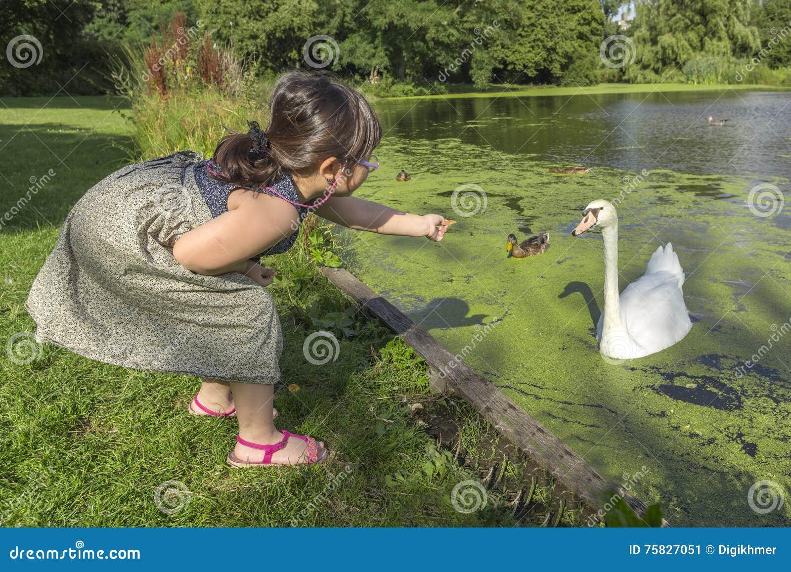 Żywieniowi łabędź i kaczki