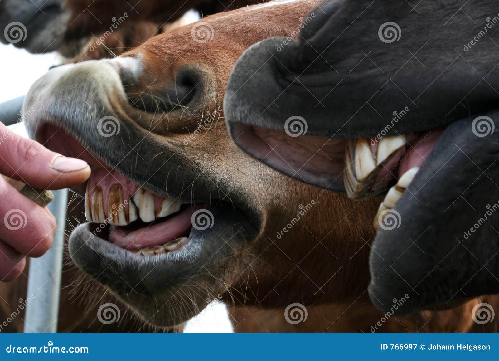 Zähne des Reinigungspferds