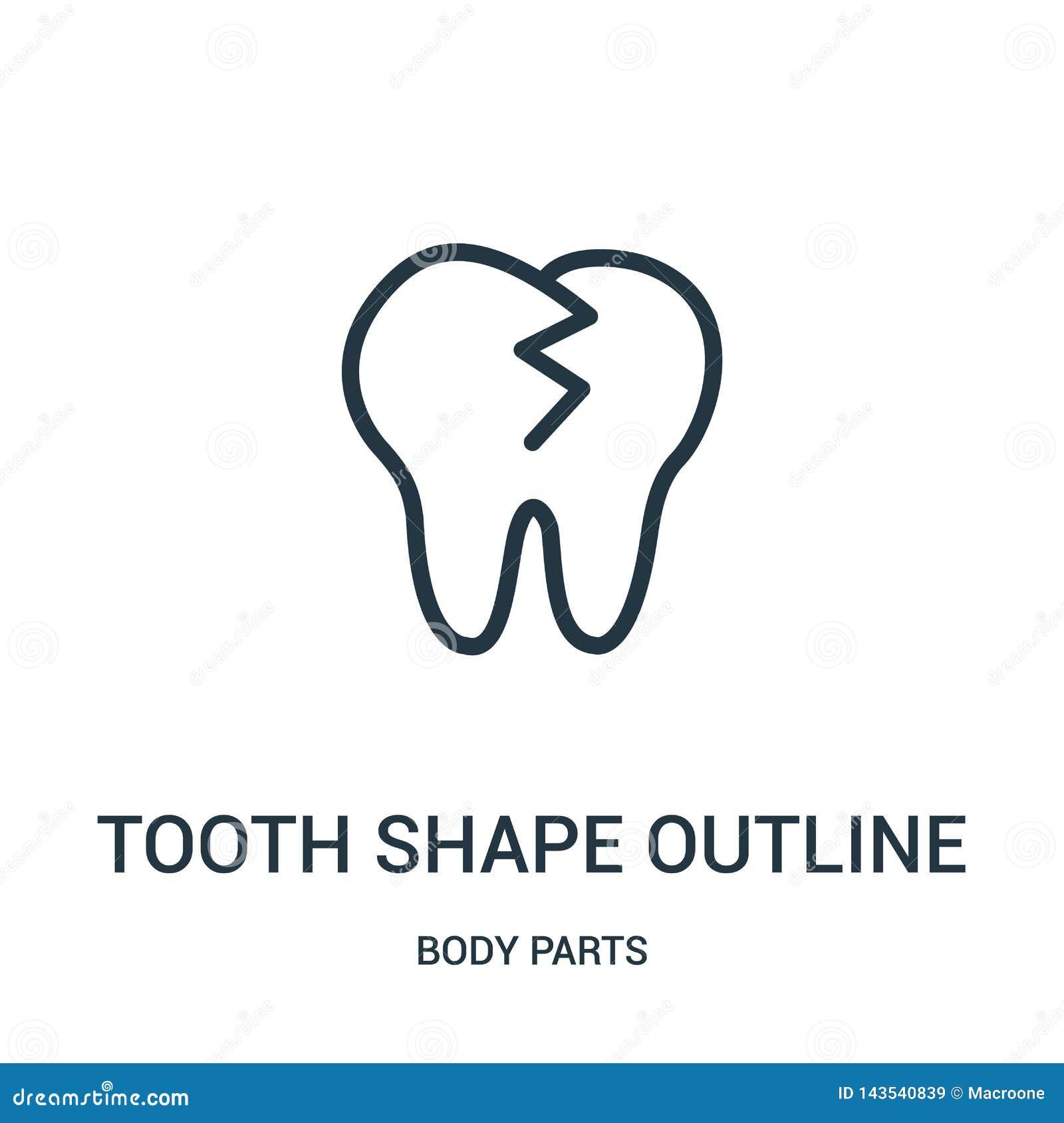 Zębu kształta konturu ikony wektor od części ciałych inkasowych Cienka kreskowa zębu kształta konturu konturu ikony wektoru ilust
