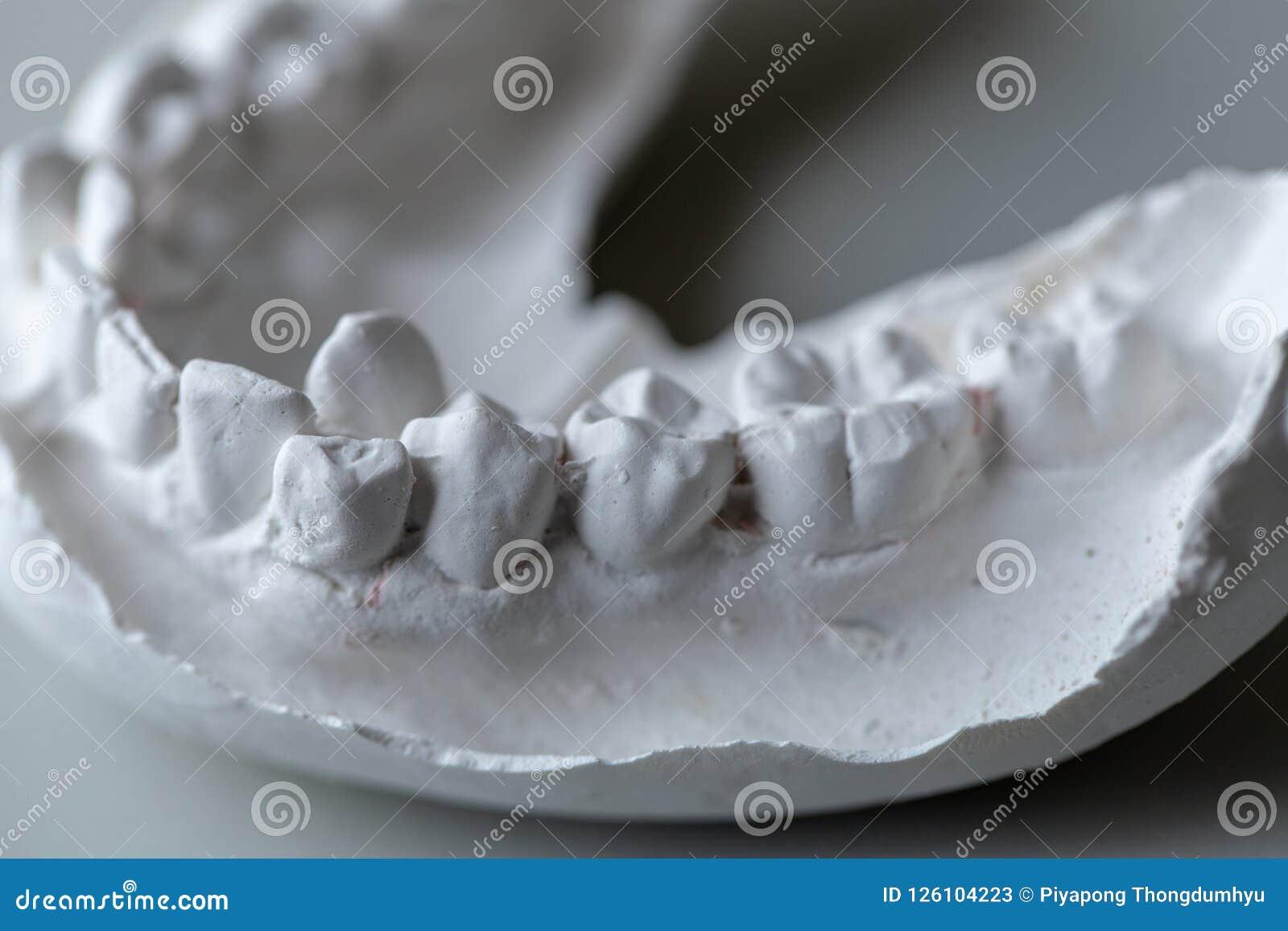 Zębu model dla edukaci w laboratorium
