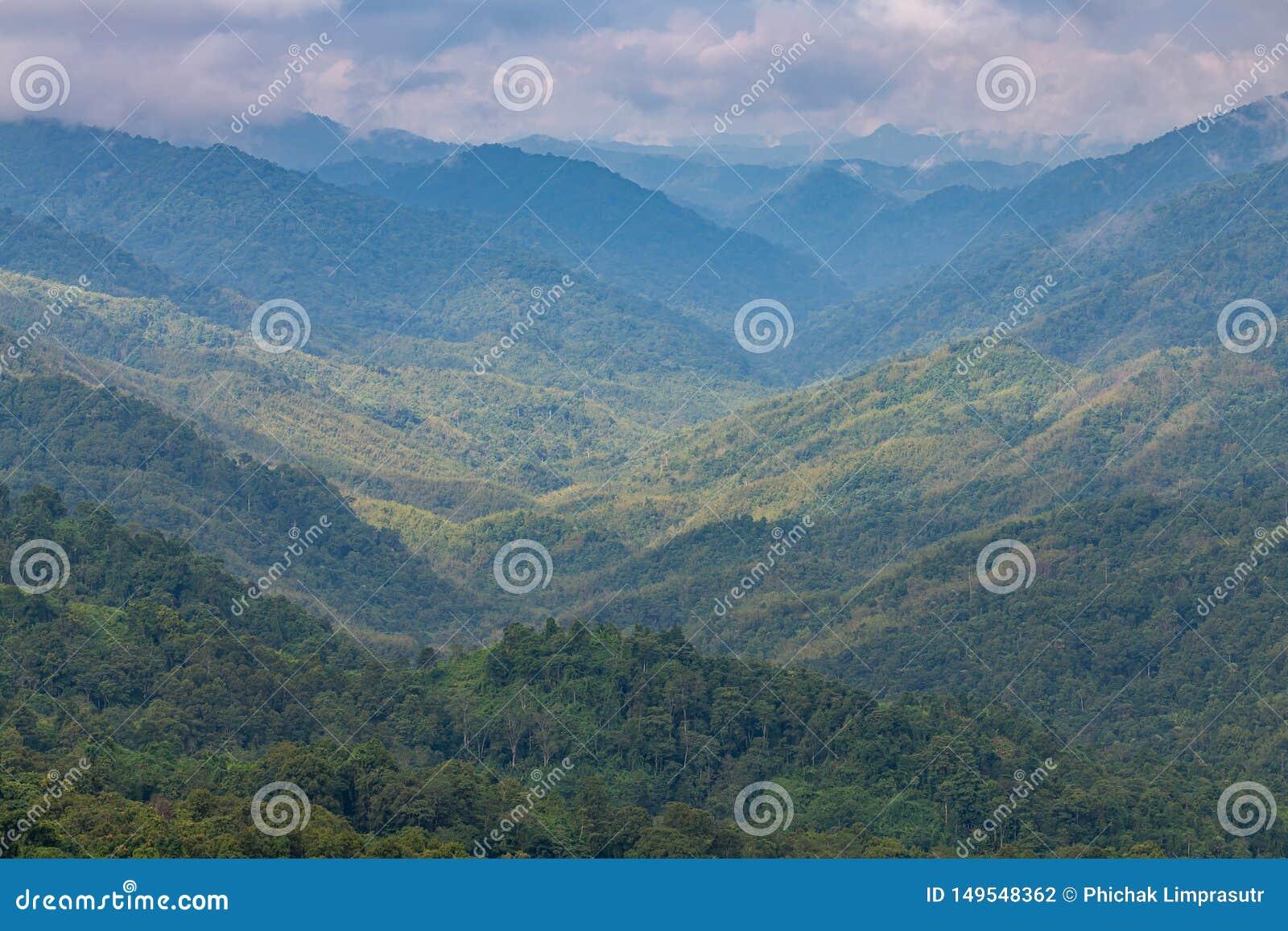 Złożoność góry, doliny różnorodność las z pięknymi niskimi chmurami na wierzchołku i