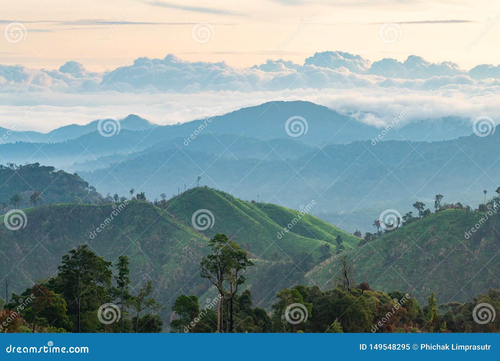 Złożoność góry krajobrazowa i drzewna różnorodność las z pięknymi niskimi chmurami na wierzchołku