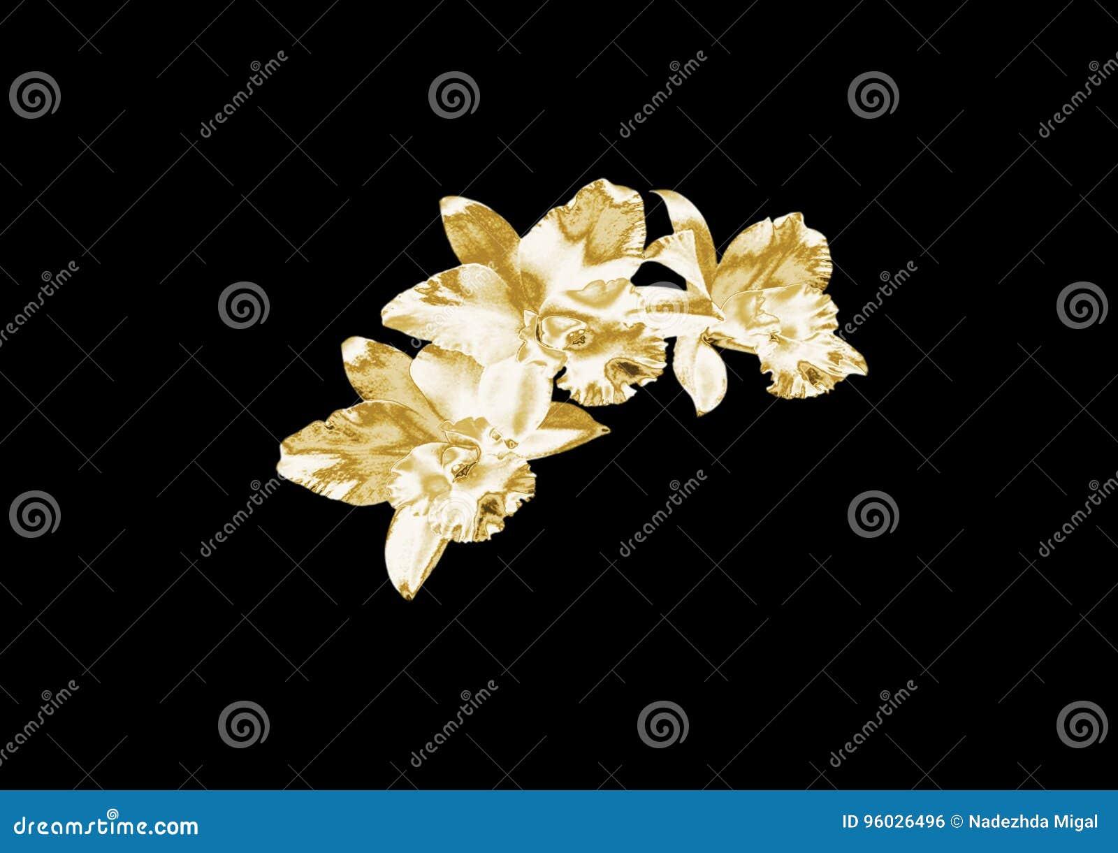 Złocista orchidea