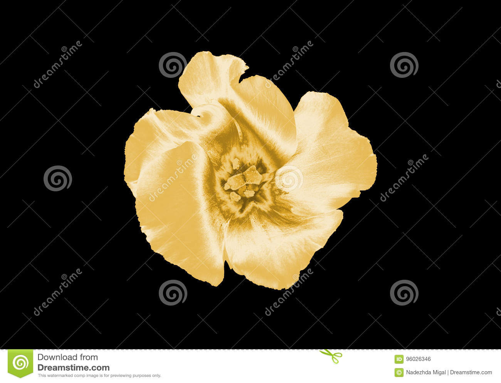 Złocisty kwiat