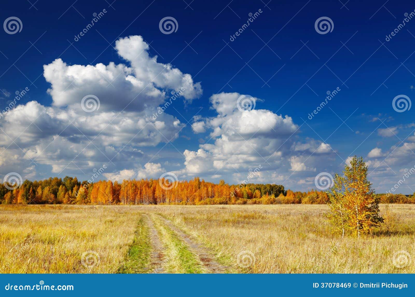 Download Złota jesień obraz stock. Obraz złożonej z złoty, sceniczny - 37078469