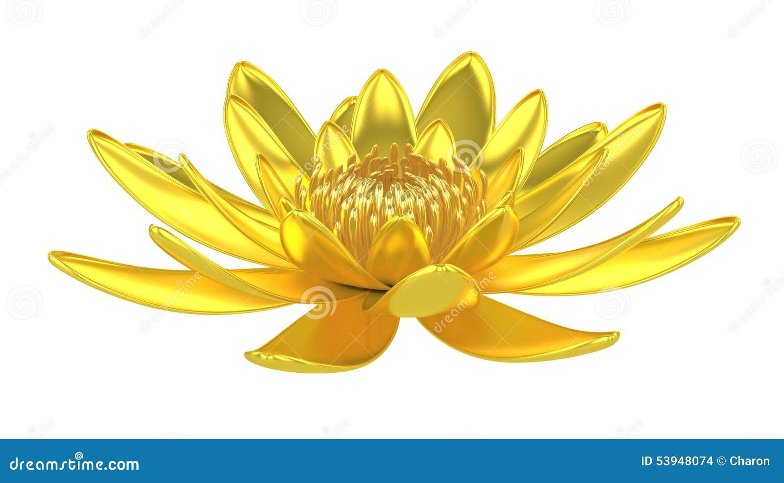 Złota lotosowego kwiatu wodna leluja