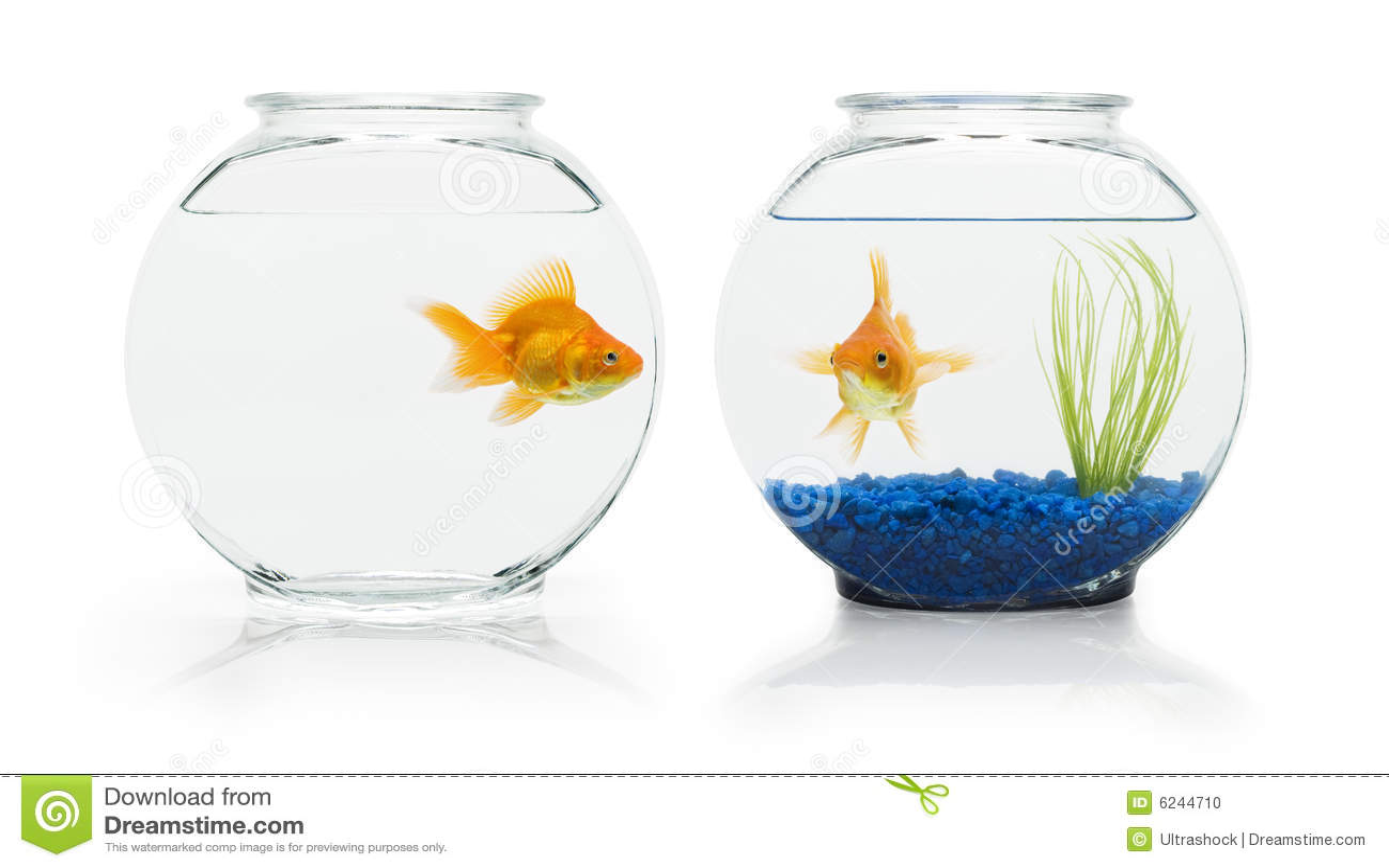Złota rybka siedlisk