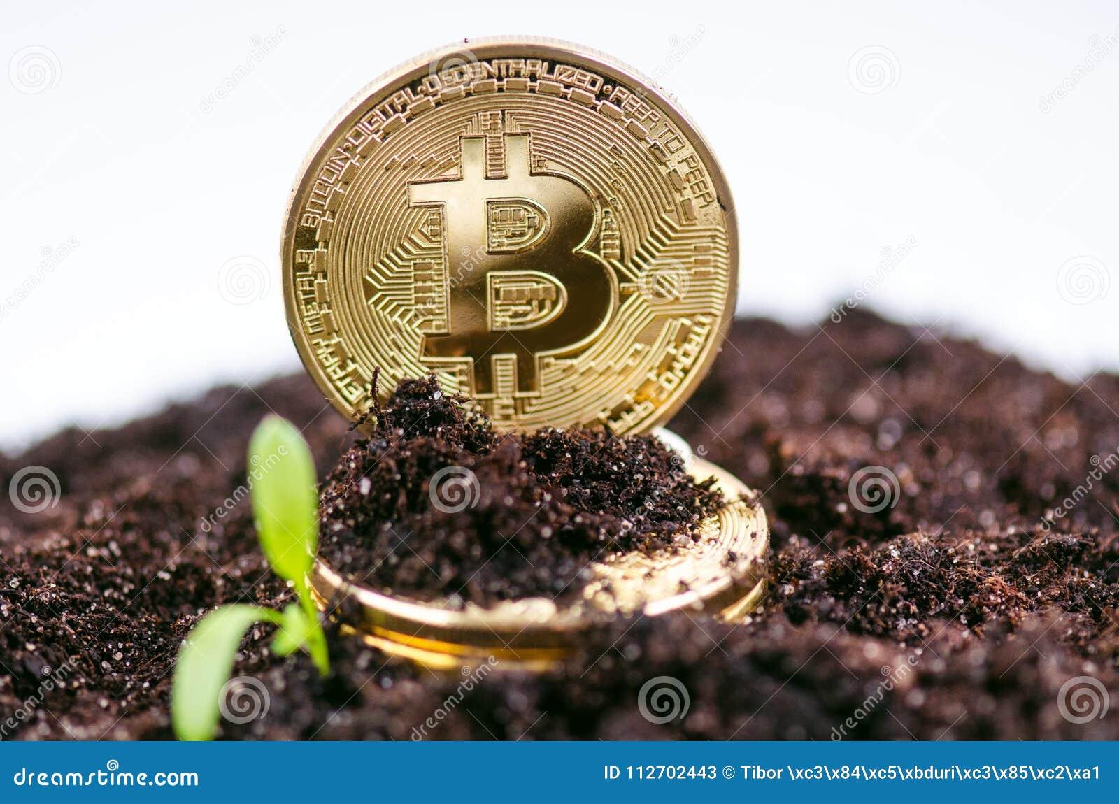 Złote bitcoin monety na ziemi i dorośnięcia roślinie Wirtualna waluta Crypto waluta nowy wirtualny pieniądze