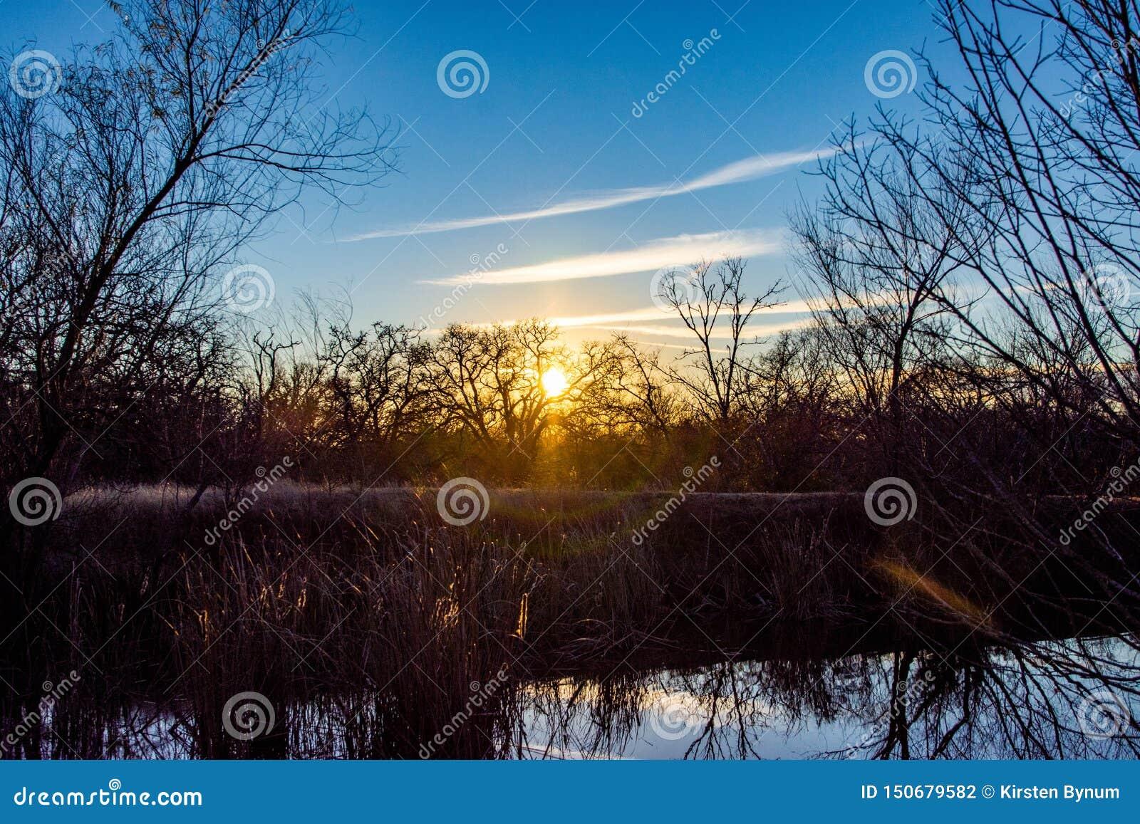 Złotej godziny Jeziorna Drzewna sylwetka